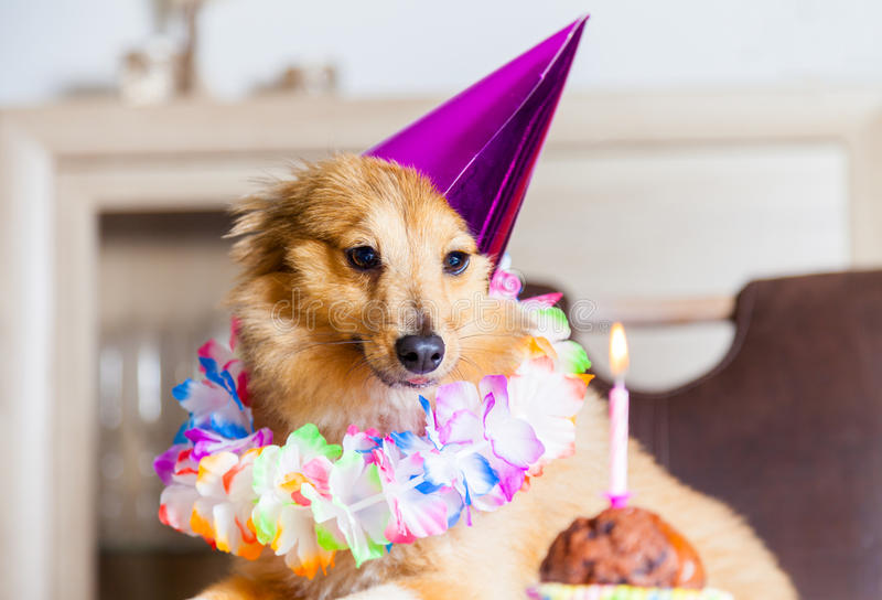 Happy birthday dog looks to candle. A happy birthday dog looks to candle stock photography