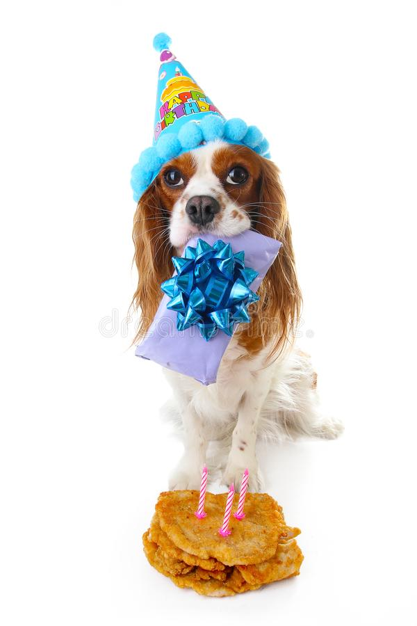 Happy Birthday Dog Photo Cavalier King Charles Spaniel Puppy Dog