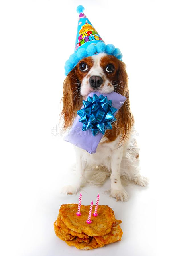 Happy birthday dog photo. Cavalier king charles spaniel puppy dog celebrate 3. birthday. Three years old puppy with. Birthday cake and gift. Dog holding gift on stock photography