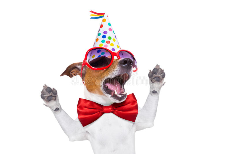 Happy birthday dog singing. Jack russell dog as a surprise, singing birthday song , wearing red tie and party hat , isolated on white background stock photos