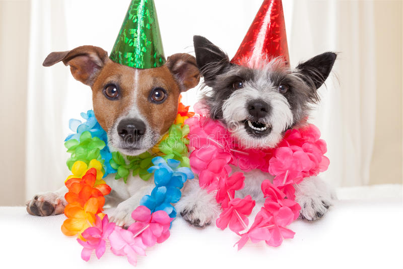 Happy birthday dogs. Two funny birthday dogs celebrating close together as a couple stock photos