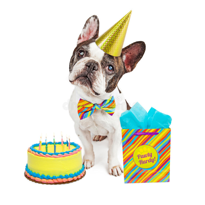 Happy Birthday French Bulldog Stock Photo Image Of