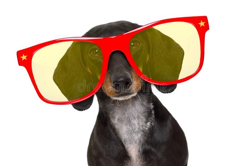 Happy birthday party dog royalty free stock photography