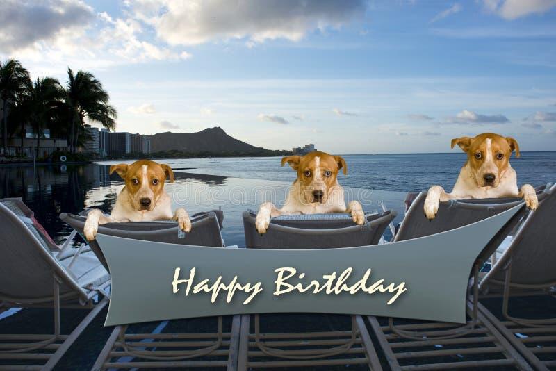 Happy Birthday. stock photography