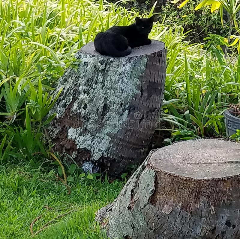 Happy Black Cat Resting on a Tree Trunk in the Shade. Big Island, Honaunau, Hawaii royalty free stock images