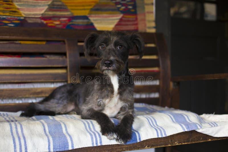Happy black dog stock photos