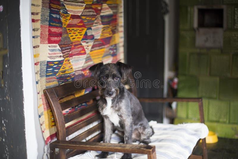 Happy black dog stock photo