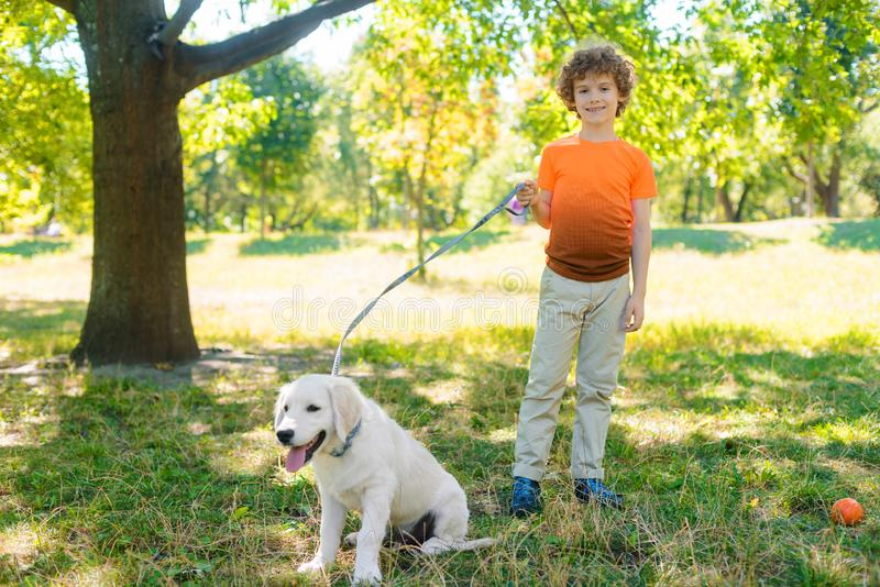 Happy boy with his pet. During their walk in the park with lots of sunshine. Little child looks right in the camera and holds a dog-lead royalty free stock image
