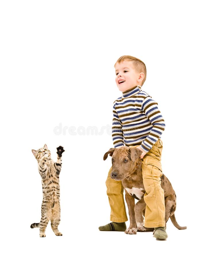Happy boy playing with a puppy and kitten. Isolated on white background stock images