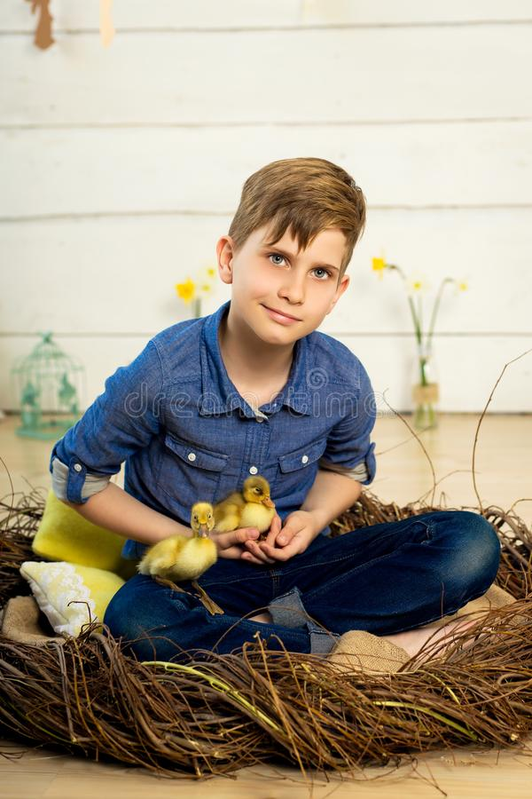 Happy boy sits in a nest and holds cute fluffy easter ducklings in his arms stock photos