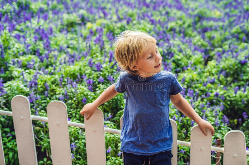 Happy boy tourist in lavender summer field. Traveling with child royalty free stock images