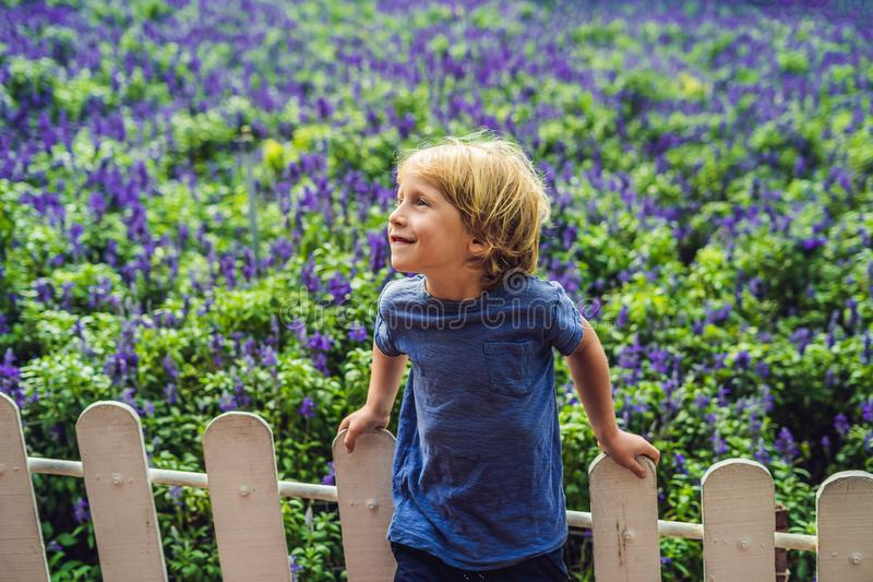 Happy boy tourist in lavender summer field. Traveling with children concept stock photography