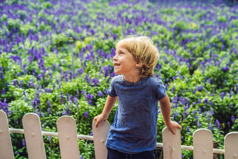 Happy boy tourist in lavender summer field. Traveling with children concept royalty free stock images