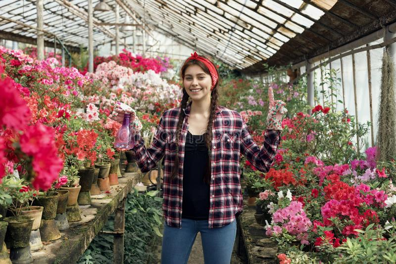 Happy brunette woman gardener with pink and red flowers in a greenhouse wearing plaid shirt with a red headband royalty free stock image