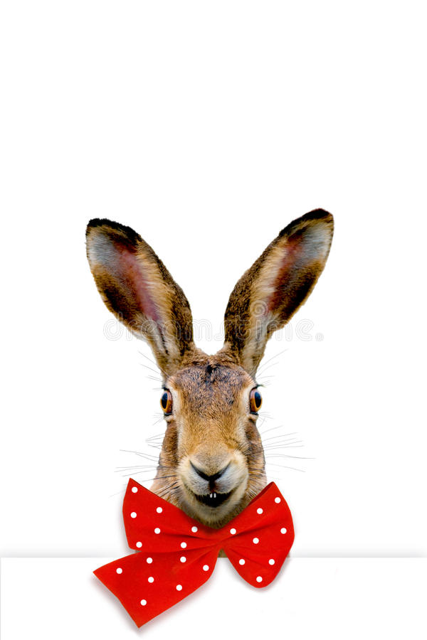 Happy bunny. Smiling bunny with red bow tie on white background stock photography