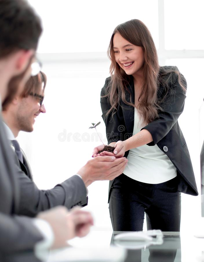 Happy business team holding a fresh sprout stock photos