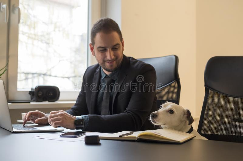 Happy businessman working on laptop in office sitting next to dog with a tie. By window black table with notebook papers phone jack russell terrier royalty free stock images