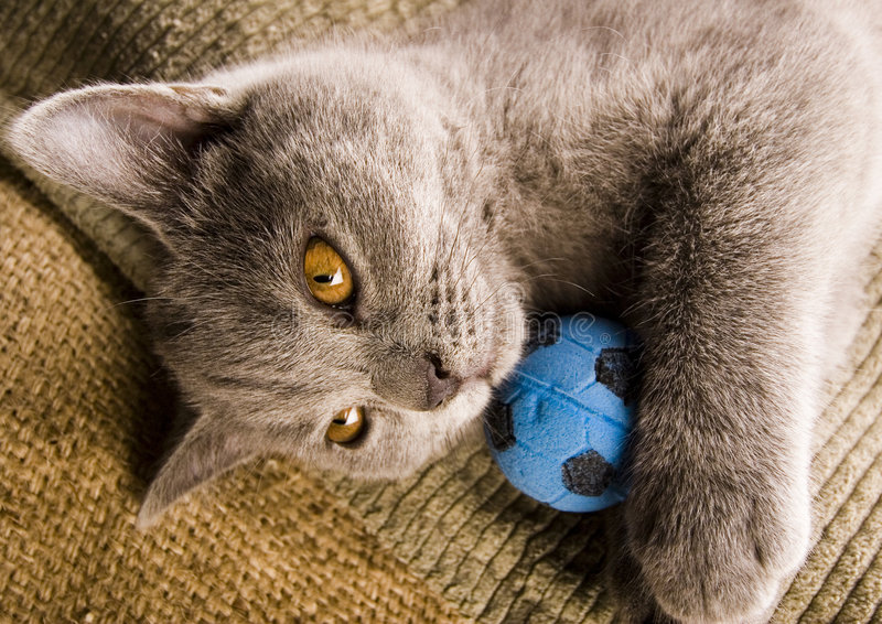 Happy cat. Cat - the small furry animal with four legs and a tail; people often keep cats as pets royalty free stock photo