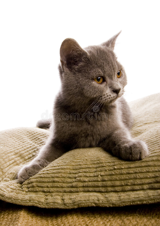 Happy cat. Cat - the small furry animal with four legs and a tail; people often keep cats as pets stock photo