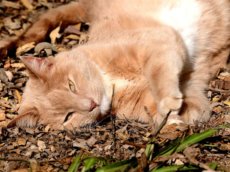 Download Happy Cat stock photo. Image of plants, wood, smile, whiskers - 31894652