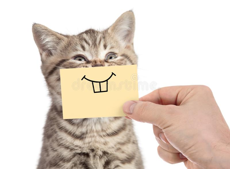 Happy cat with funny smile on cardboard isolated on white stock image