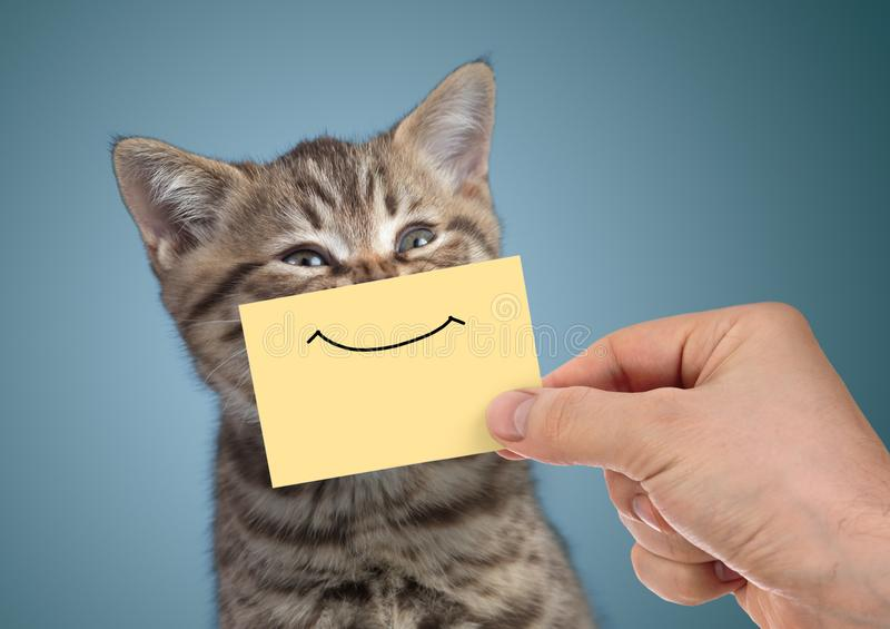 Happy cat portrait with funny smile on cardboard. Happy young cat portrait with funny smile on cardboard on blue background royalty free stock photos