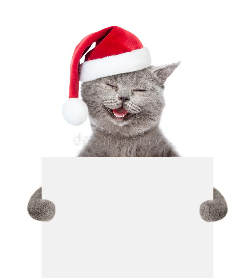 Happy cat in red christmas hat holding a white banner. isolated on white background stock photo