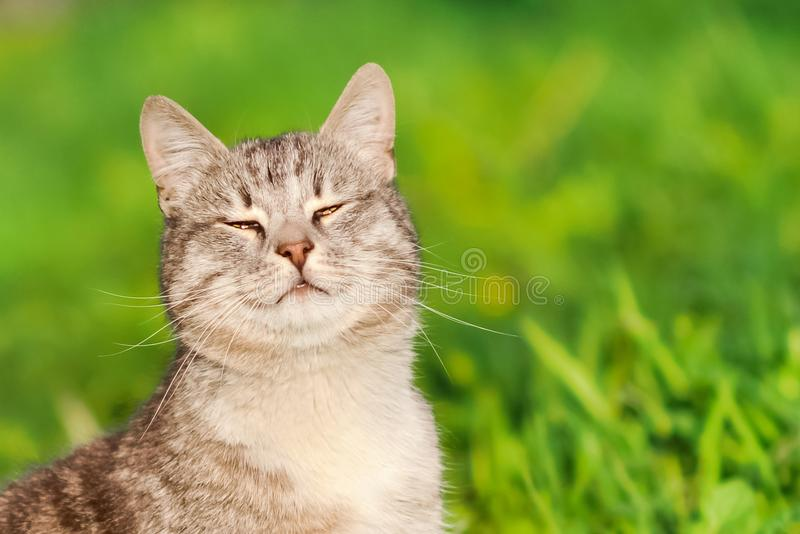 Happy cat sitting in the grass and smiling in the summer sun stock image