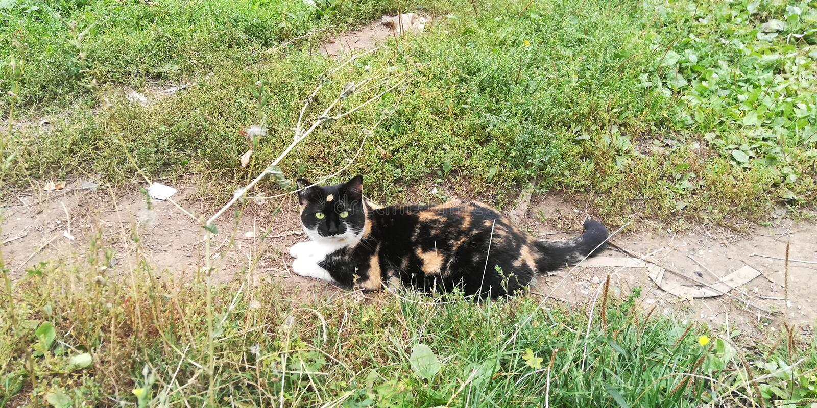 Happy cat on summer walk. Witches and wizards always kept cats, believing that they are the conduits to the underworld. Especially they valued tricolor cat, as royalty free stock photo