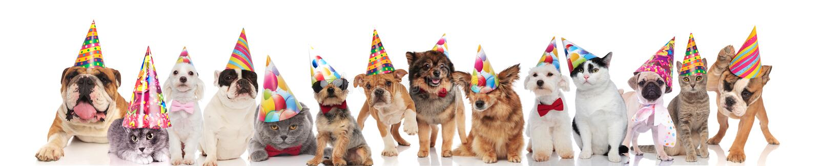 Happy cats and dogs with colorful caps on white background. Happy cats and dogs with colorful birthday caps standing, sitting and lying on white background stock photo