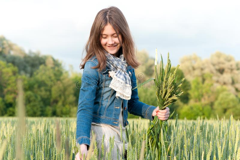 Happy cheerful young girl picking stems on wheat field. Happy cheerful young girl collecting stems in rays of sunlight on wheat field. Multi colored summertime royalty free stock photo