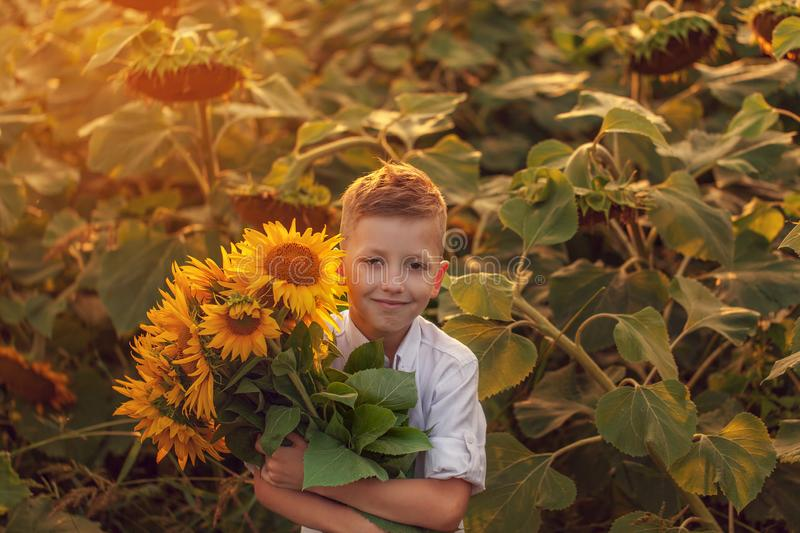 Happy child with bouquet of beautiful sunflowers in summer sunflower field on sunset. Mother day stock photos