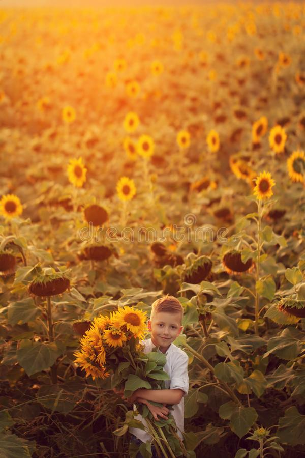 Happy child with bouquet of beautiful sunflowers in summer sunflower field on sunset. Mother day stock images