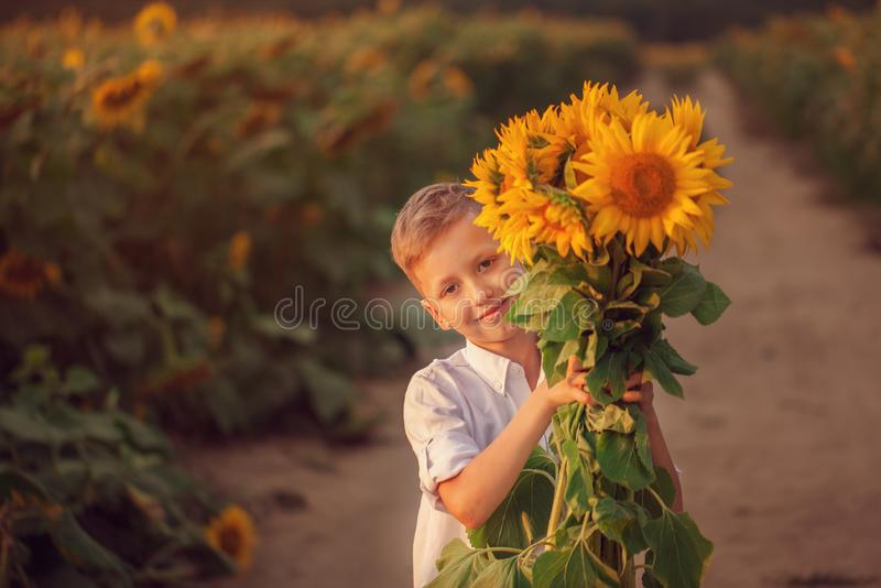 Happy child with bouquet of beautiful sunflowers in summer sunflower field on sunset. Mother day stock image