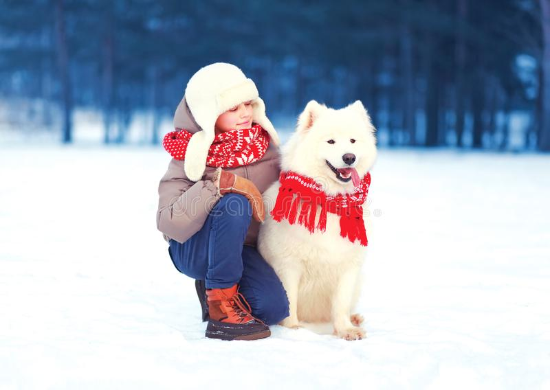 Happy child boy is walking with white Samoyed dog in winter royalty free stock images