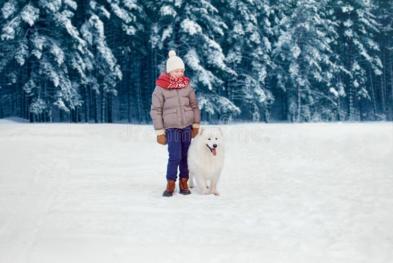 Happy child boy walking with white Samoyed dog in winter day stock images