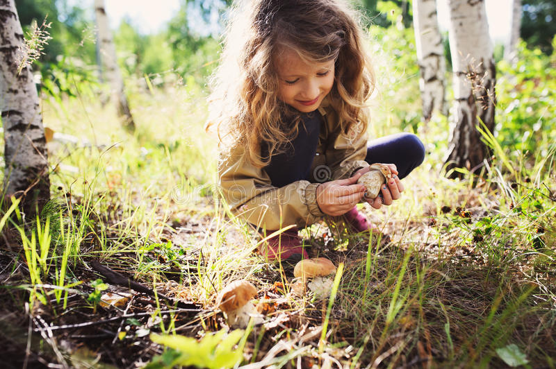 Happy child girl picking wild mushrooms on the walk in summer. Or autumn forest royalty free stock images