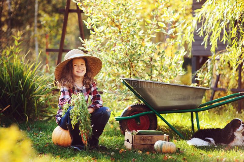 Happy child girl with spaniel dog playing little farmer in autumn garden. And picking vegetable harvest. Growing fresh carrots, zuccini and pumpkins stock photography