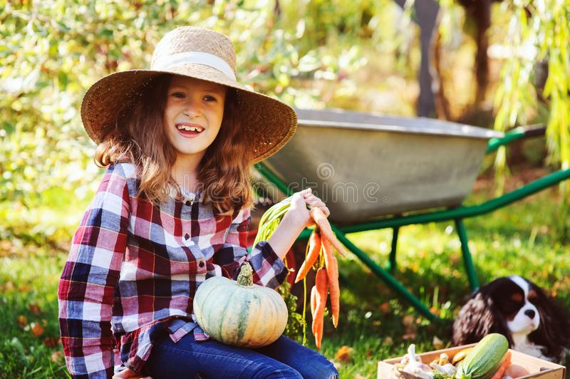 Happy child girl with spaniel dog playing little farmer in autumn garden and picking vegetable harvest stock image