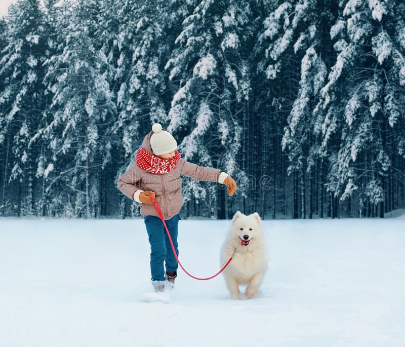 Happy child running with white Samoyed dog, playing on winter snowy stock photo