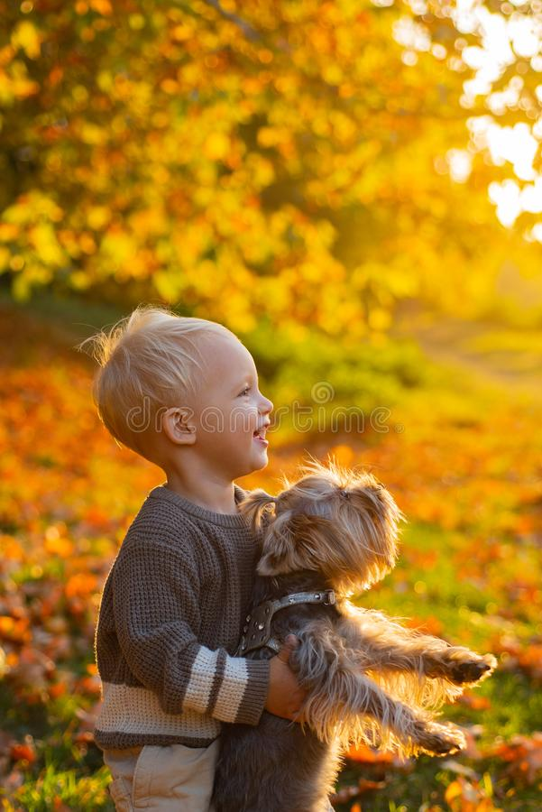 Happy childhood. Sweet childhood memories. Child play with yorkshire terrier dog. Toddler boy enjoy autumn with dog royalty free stock photography