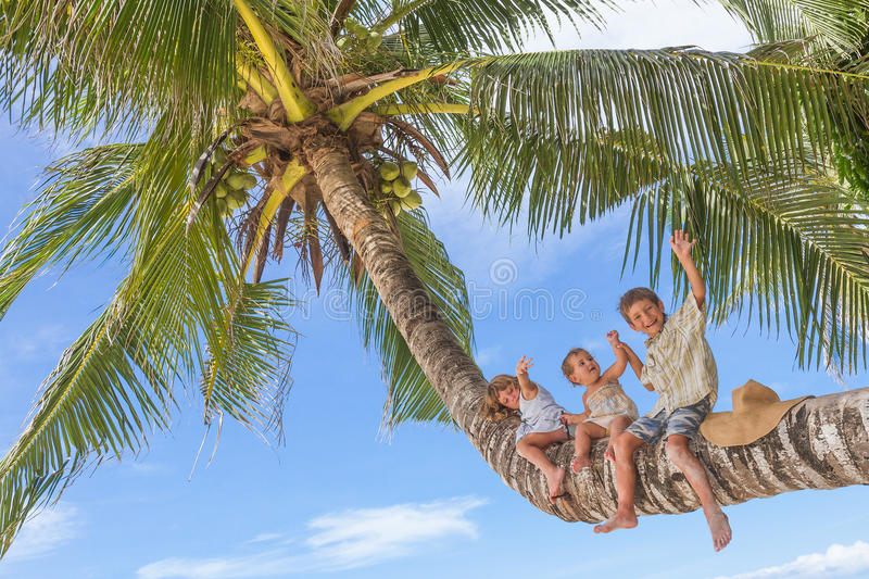 Happy children - boy and girls - on palm tree, tropical. Happy children - boy and girls - sitting on palm tree, tropical beach vacation stock images