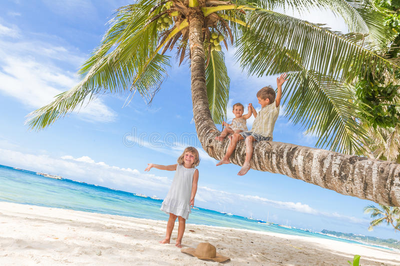 Happy children - boy and girls - on palm tree, tropical. Happy children - boy and girls - sitting on palm tree, tropical beach vacation royalty free stock image