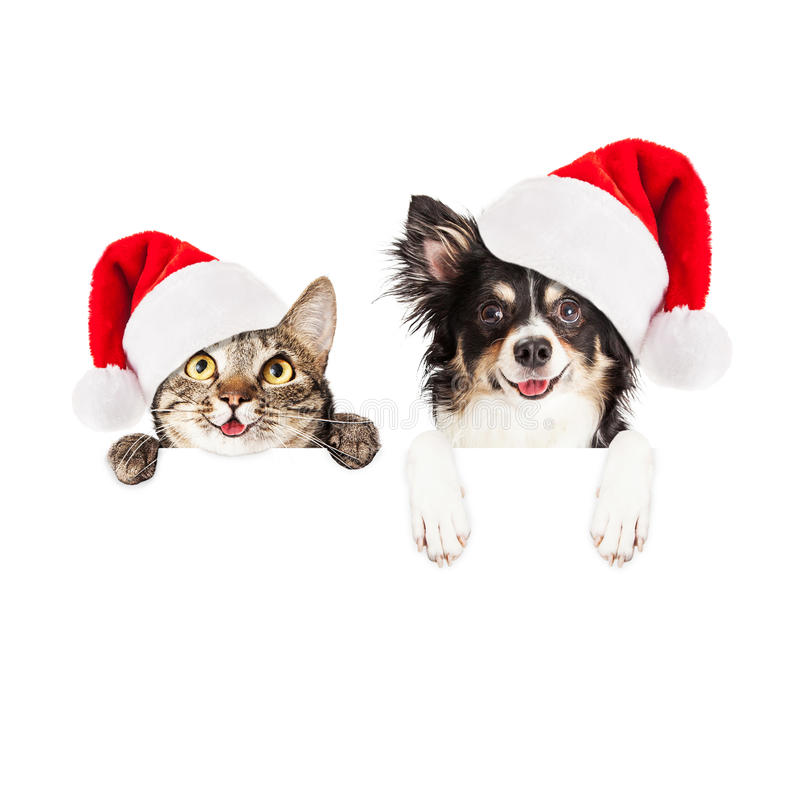 Happy Christmas Dog and Cat Over White Banner stock images