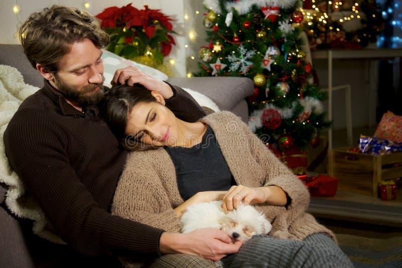 Happy couple caressing little puppy dog christmas night stock photo