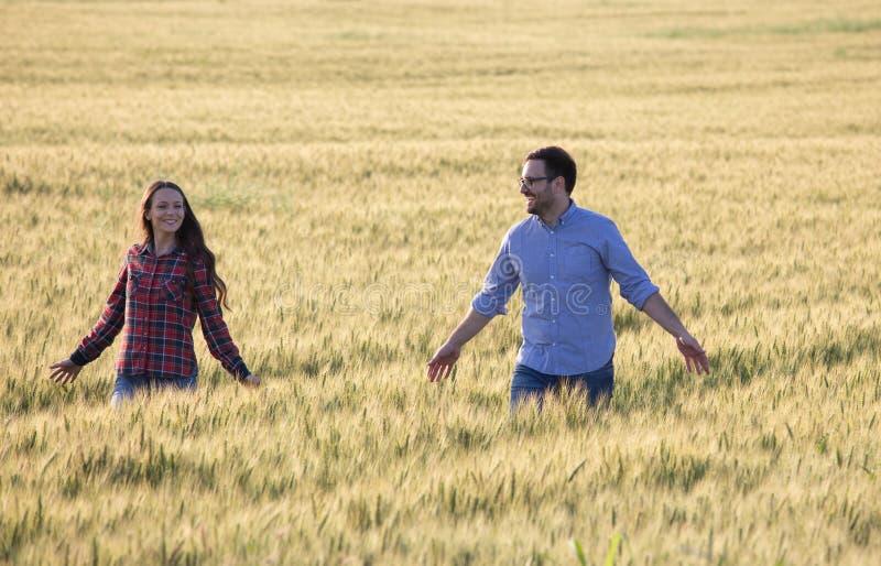 Couple walking in barley field royalty free stock image