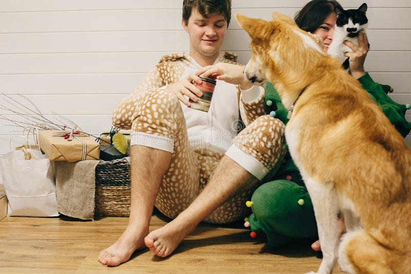 Happy couple in festive pajamas having fun and feeding pets with canned food. Celebrating Christmas or New Year eve together with royalty free stock photo