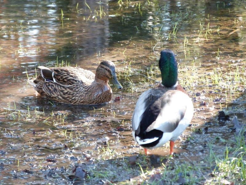 A Happy Couple Free Public Domain Cc0 Image