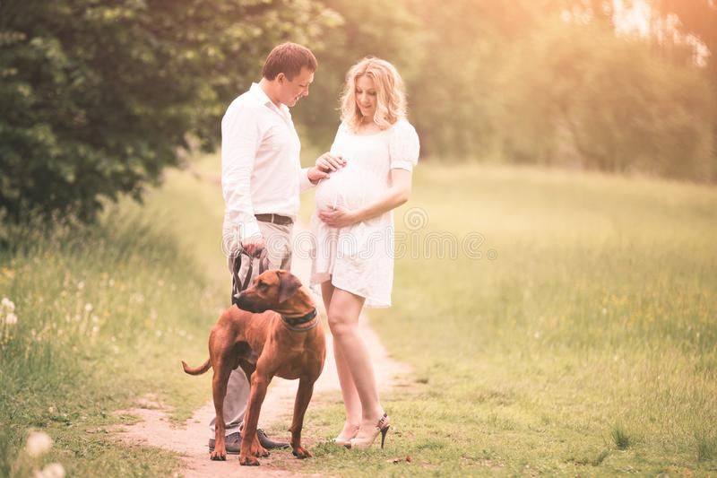 Happy couple future parents on the walk with the dog in the Park royalty free stock photo