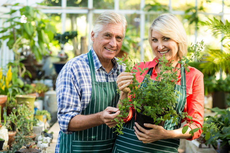 Happy couple holding potted plant in greenhouse stock image